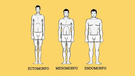 biotipo masculino