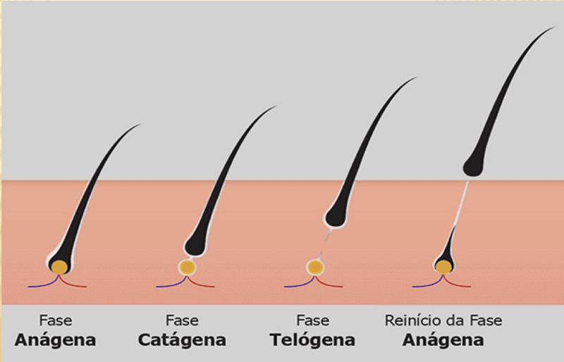 fases-crescimento-cabelo